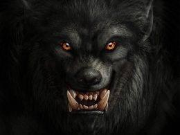 Ilustração que representa a imagem mais comum dos lobisomens, rosto que lembra o de um lobo, olhos amarelos, pelos negros, focinho, presas e orelhas pontiagudas.